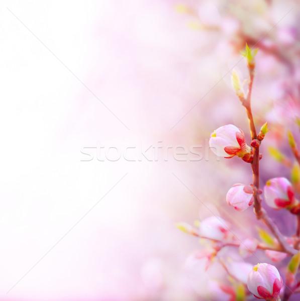Sanat güzel bahar ağaç gökyüzü Stok fotoğraf © Konstanttin