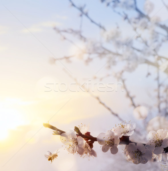 art Spring flower background; Happy Easter and blooming tree  Сток-фото © Konstanttin