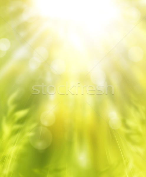 Primavera arte sol luz diseno belleza Foto stock © Konstanttin