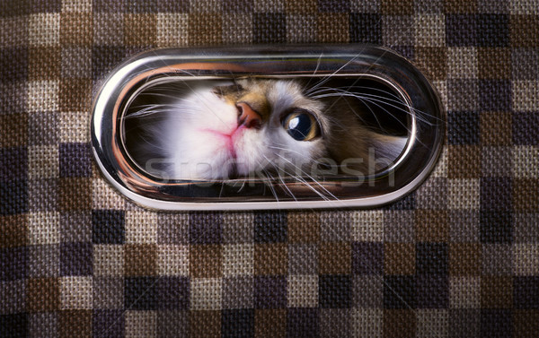 art frightened and surprised Gray cat looking up with  box Stock photo © Konstanttin