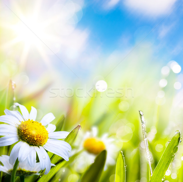 art abstract background summer flower in grass with water drops  Stock photo © Konstanttin