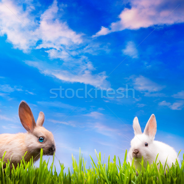 art couple  little Easter rabbits  on green grass Stock photo © Konstanttin
