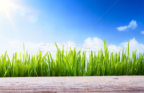 Art abstract spring or Summer background with green grass and wo Stock photo © Konstanttin