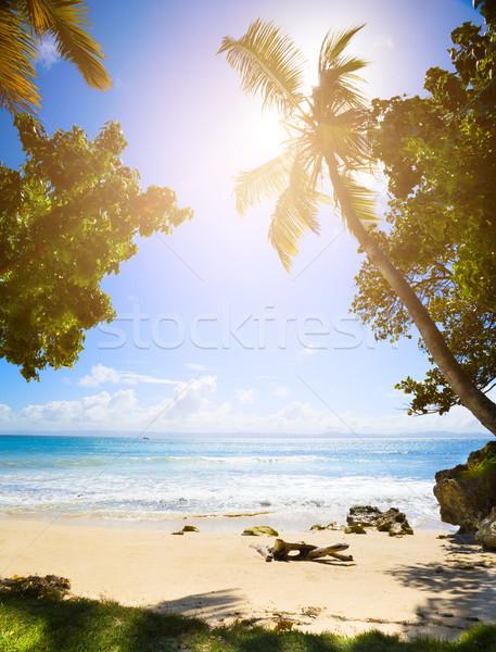 Kunst zomer tropisch strand vreedzaam vakantie zon Stockfoto © Konstanttin