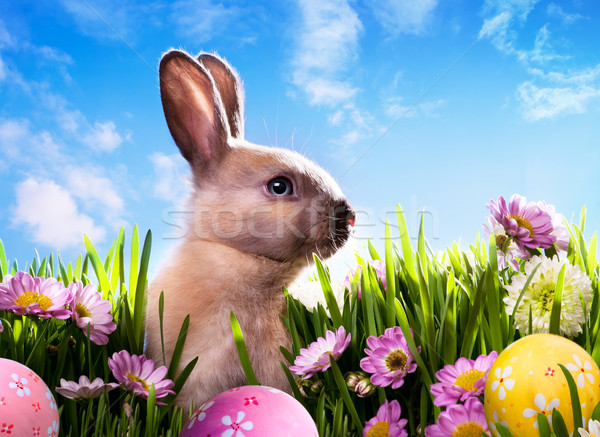 art baby Easter bunny on spring green grass Stock photo © Konstanttin