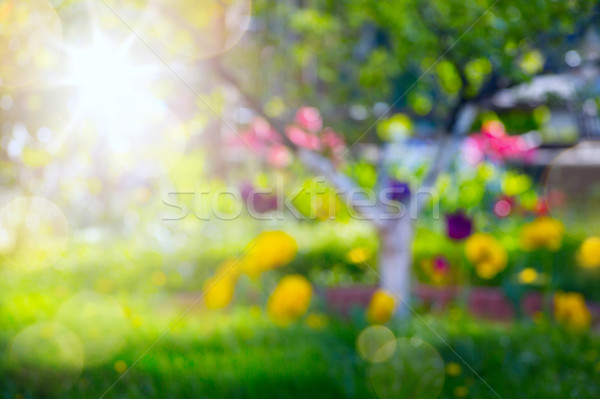 abstract spring background with fresh flower on spring garden Stock photo © Konstanttin