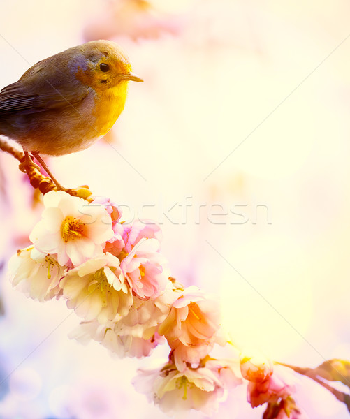 art beautiful spring morning nature background Stock photo © Konstanttin