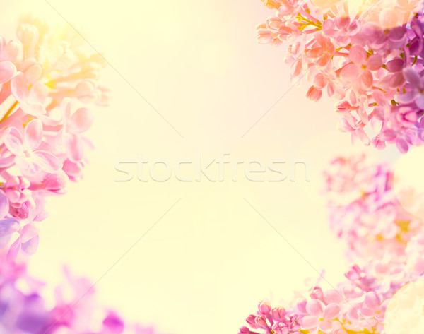 art Spring  background with fresh spring flowers Stock photo © Konstanttin