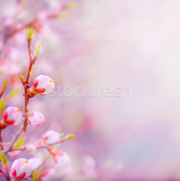 art Beautiful spring blossoming tree on sky background Stock photo © Konstanttin