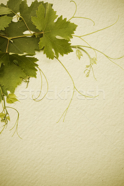 art  vintage style concept design for a wine list Stock photo © Konstanttin