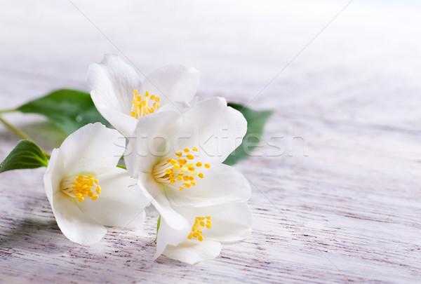 Witte bloem witte hout blad tuin zomer Stockfoto © Konstanttin