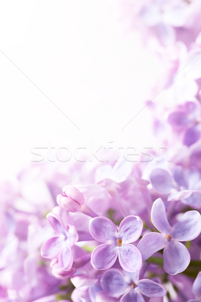 Art Spring lilac abstract background Stock photo © Konstanttin