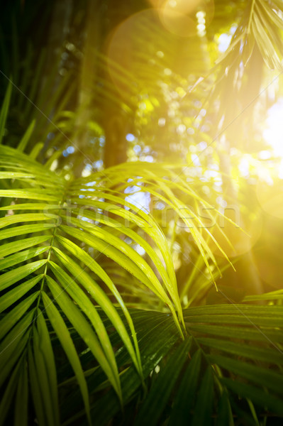 зеленый экзотический тропические листьев текстуры солнце Сток-фото © Konstanttin
