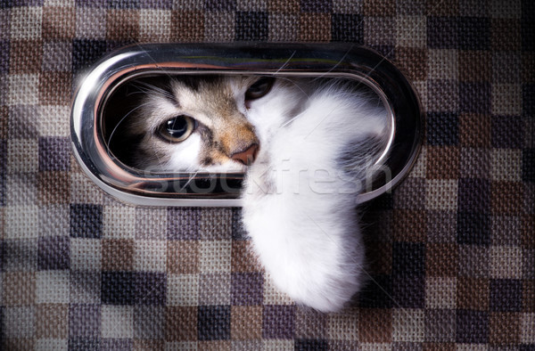 A cat plays hide and seek; Cute cat in  box Stock photo © Konstanttin