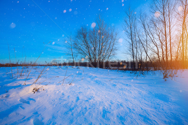 beautiful winter landscape; sunset on the snowy frozen field; ic Stock photo © Konstanttin