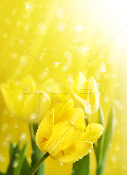 flowers under gold magic rain Stock photo © Konstanttin