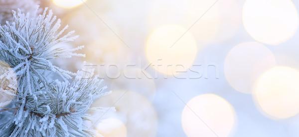 Karácsonyfa hó ünnepek fény igazi tél Stock fotó © Konstanttin