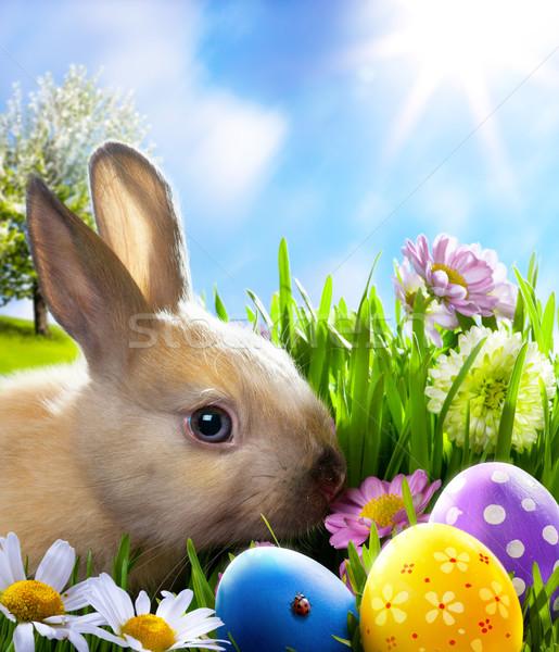 Art peu lapin de Pâques œufs de Pâques herbe verte printemps Photo stock © Konstanttin