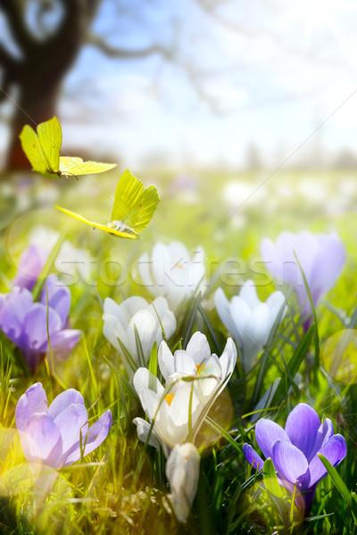 Flor de primavera volar mariposa resumen soleado hermosa Foto stock © Konstanttin