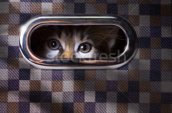 frightened and surprised Gray cat looking up with  box Stock photo © Konstanttin