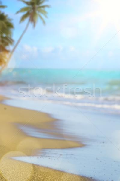 Blur mooie natuur palmboom tropisch strand bokeh Stockfoto © Konstanttin