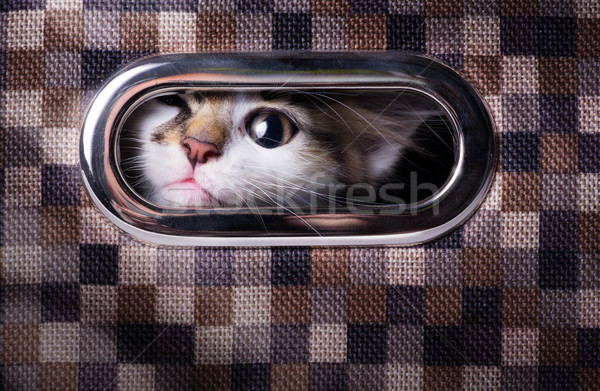 Arte spaventato sorpreso gatto grigio finestra Foto d'archivio © Konstanttin
