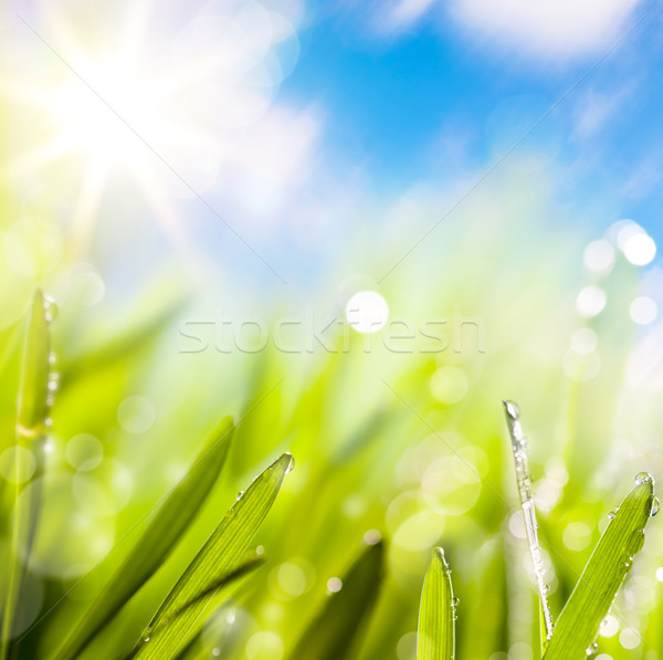 abstracts of natural spring green background Stock photo © Konstanttin