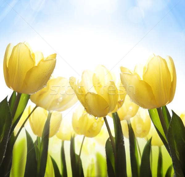 Sztuki pokryty rosa światło słoneczne Wielkanoc Zdjęcia stock © Konstanttin