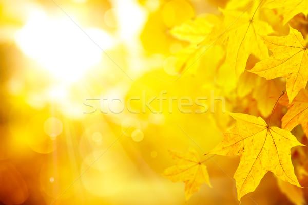 Streszczenie pomarańczowy jesienią żółty klon pozostawia Zdjęcia stock © Konstanttin