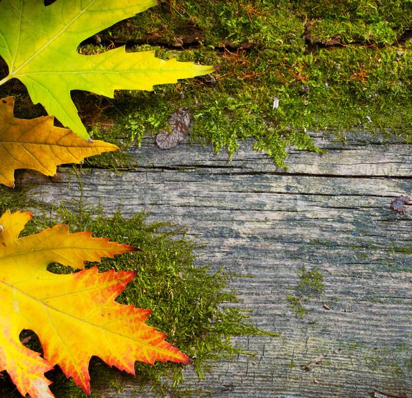 Art grunge vieux bois jaune humide Photo stock © Konstanttin