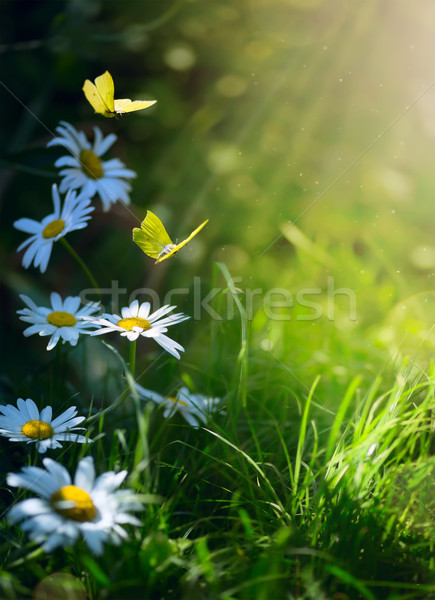 art abstract spring background or summer background with fresh f Stock photo © Konstanttin