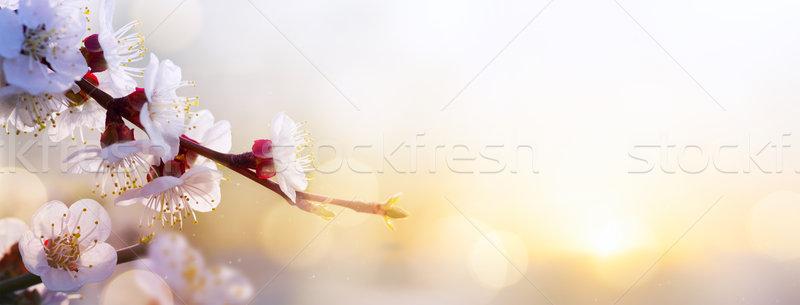 весенний цветок Пасху пейзаж небе весны счастливым Сток-фото © Konstanttin