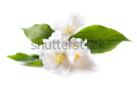 jasmine white flower isolated on white background Stock photo © Konstanttin