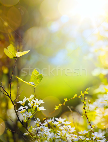 Spring flower and fly butterfly; abstract sunny beautiful Easter Stock photo © Konstanttin