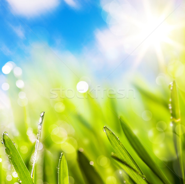 Természetes tavasz zöld víz fű nap Stock fotó © Konstanttin