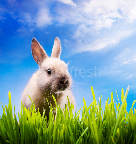 Stock photo: Little Easter bunny on green grass