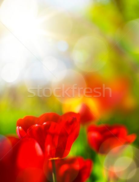 art spring background Foto stock © Konstanttin