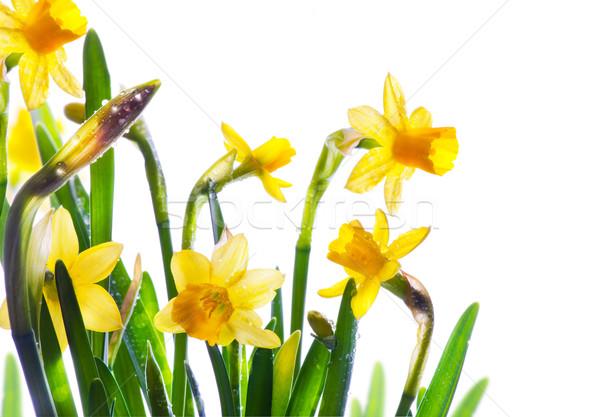 Arte flores da primavera coberto orvalho luz solar Foto stock © Konstanttin