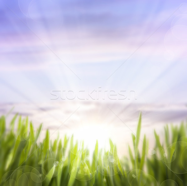 art abstract background of spring grass and sky Stock photo © Konstanttin