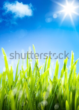 Stock photo:  abstract  morning dew on the grass in the spring, a natural spr