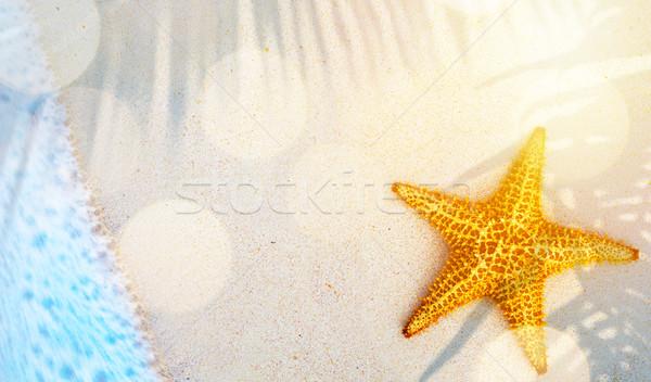 Sztuki tropikalnych lata plaży podróży Rozgwiazda Zdjęcia stock © Konstanttin