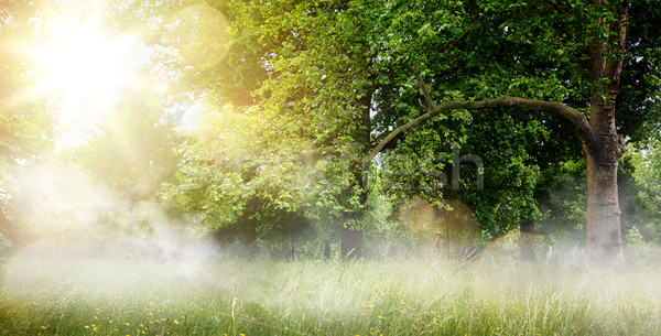countryside landscape; morning forest field and blooming grass Stock photo © Konstanttin