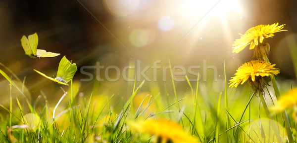 Easter spring flower background; fresh flower and yellow butterf Foto stock © Konstanttin