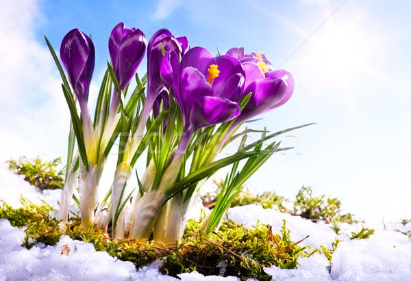 art Spring florwer background Stock photo © Konstanttin