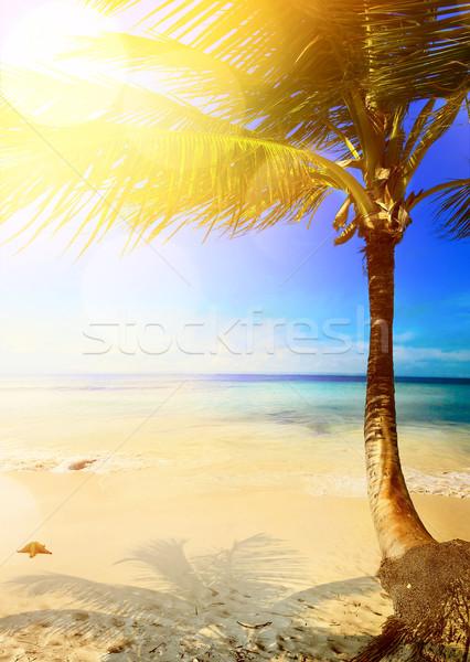 Sanat caribbean tropikal deniz plaj doğa Stok fotoğraf © Konstanttin