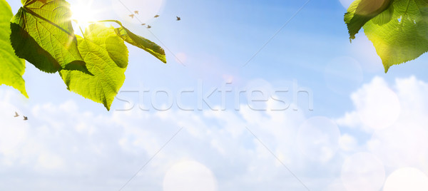 art abstract spring background or summer background with fresh t Stock photo © Konstanttin