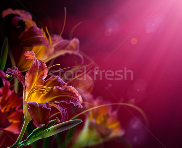 Flowers on a red background .With copy-space  Stock photo © Konstanttin