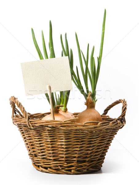 art spring onions growing in the basket Stock photo © Konstanttin