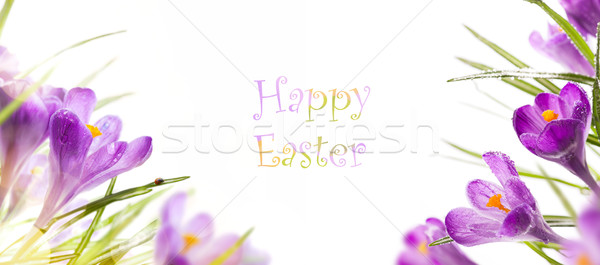 art easter background with spring flowers Stock photo © Konstanttin