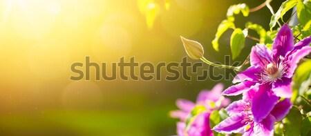 Sztuki wiosną lata charakter kwiaty kwiatowy Zdjęcia stock © Konstanttin